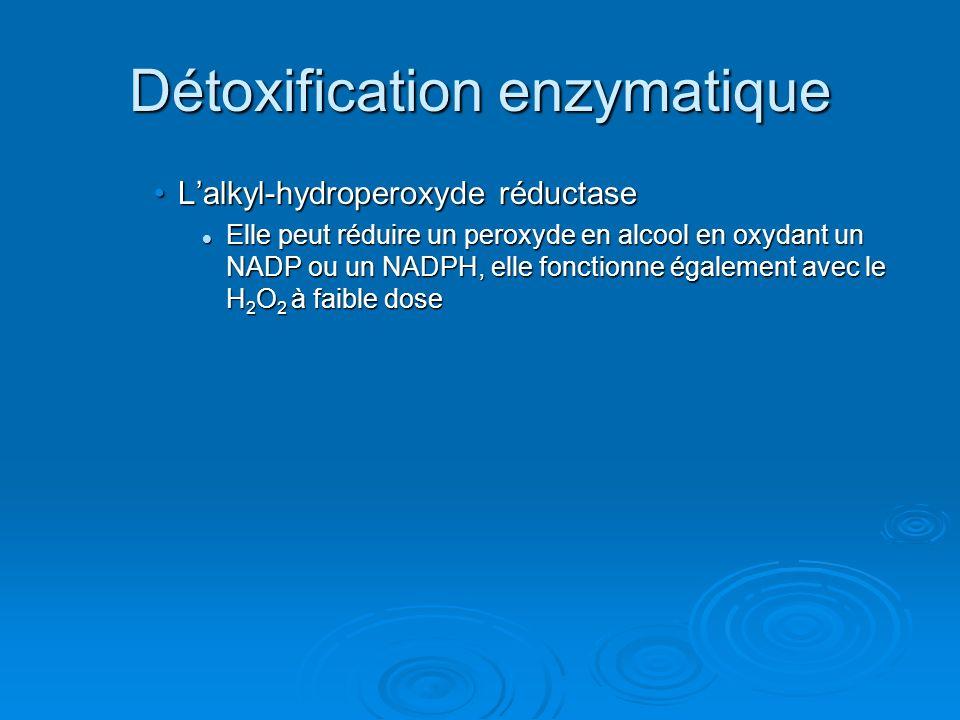 Détoxification enzymatique Lalkyl-hydroperoxyde réductaseLalkyl-hydroperoxyde réductase Elle peut réduire un peroxyde en alcool en oxydant un NADP ou un NADPH, elle fonctionne également avec le H 2 O 2 à faible dose Elle peut réduire un peroxyde en alcool en oxydant un NADP ou un NADPH, elle fonctionne également avec le H 2 O 2 à faible dose
