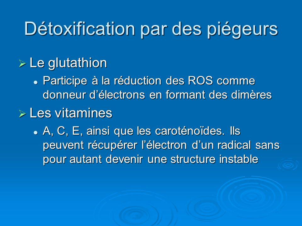 Détoxification par des piégeurs Le glutathion Le glutathion Participe à la réduction des ROS comme donneur délectrons en formant des dimères Participe
