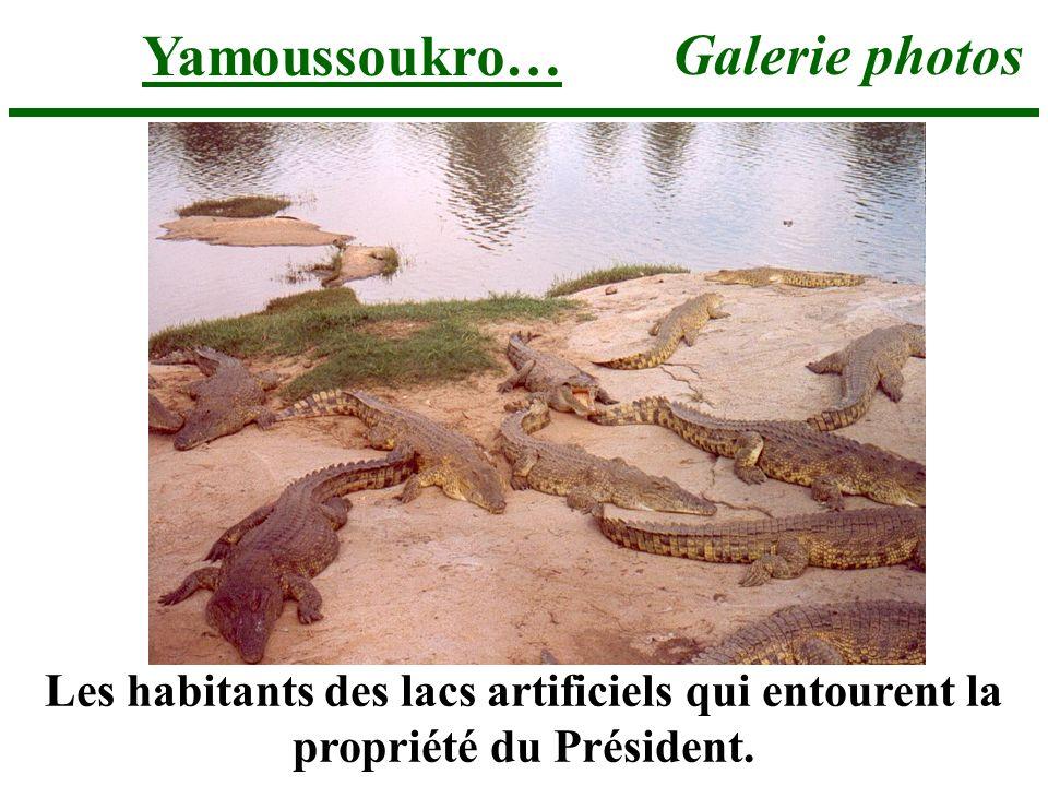 Yamoussoukro… Galerie photos Les habitants des lacs artificiels qui entourent la propriété du Président.