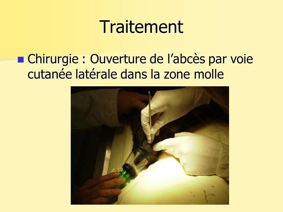 Traitement Chirurgie : Ouverture de labcès par voie cutanée latérale dans la zone molle Chirurgie : Ouverture de labcès par voie cutanée latérale dans la zone molle