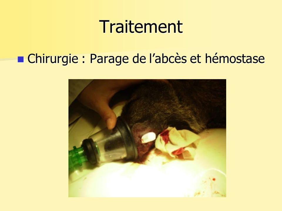 Traitement Chirurgie : Parage de labcès et hémostase Chirurgie : Parage de labcès et hémostase