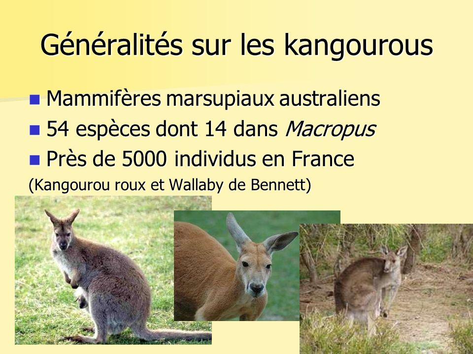 Généralités sur les kangourous Mammifères marsupiaux australiens Mammifères marsupiaux australiens 54 espèces dont 14 dans Macropus 54 espèces dont 14 dans Macropus Près de 5000 individus en France Près de 5000 individus en France (Kangourou roux et Wallaby de Bennett)