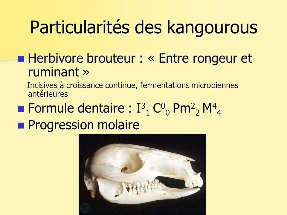 Traitement Chirurgie : Rupture du périodonte Chirurgie : Rupture du périodonte