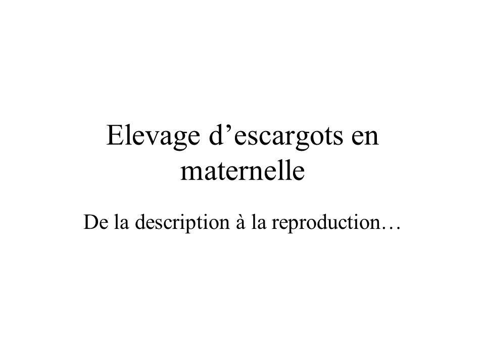 Elevage descargots en maternelle De la description à la reproduction…