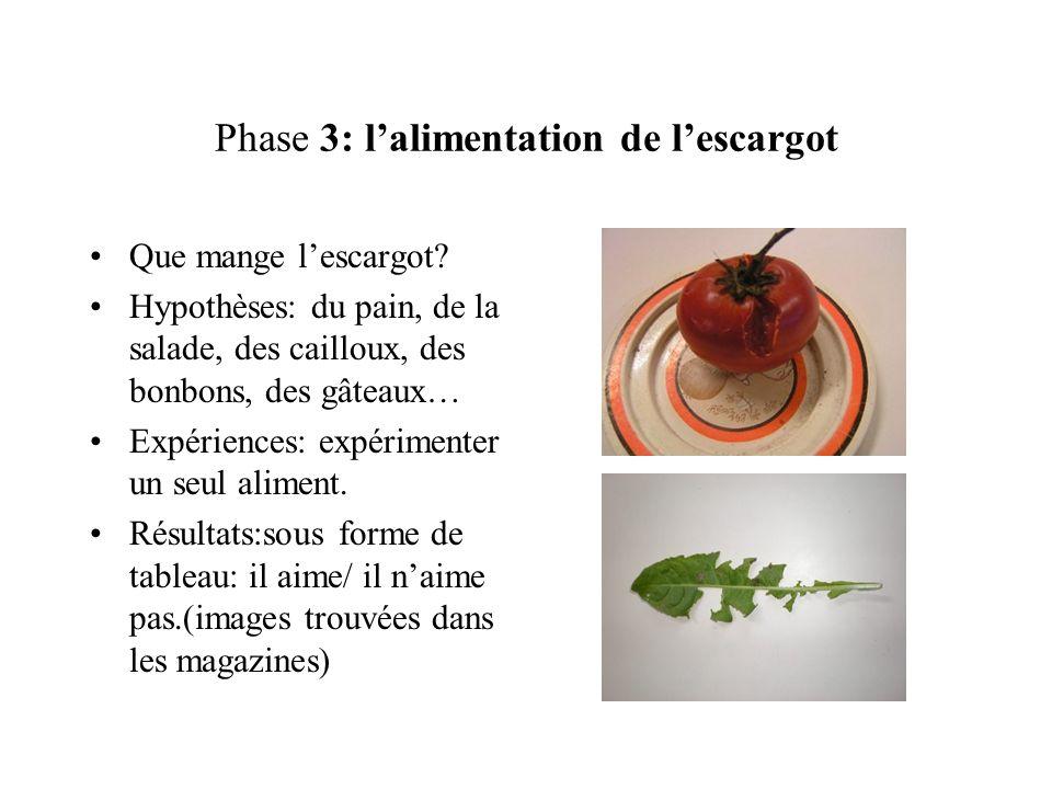 Phase 3: lalimentation de lescargot Que mange lescargot? Hypothèses: du pain, de la salade, des cailloux, des bonbons, des gâteaux… Expériences: expér