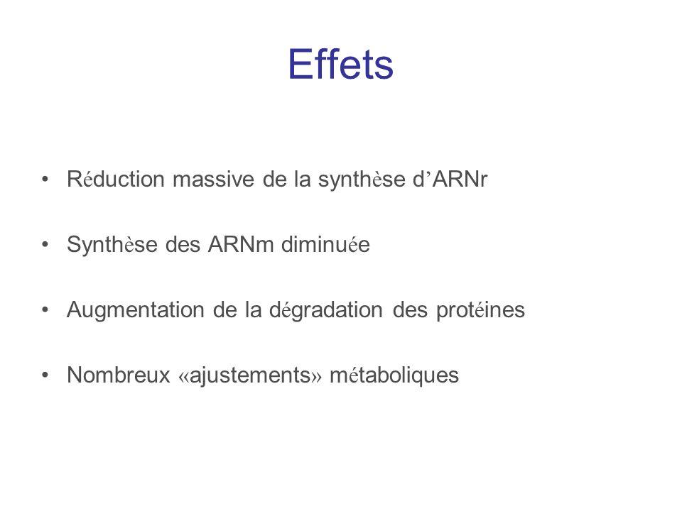 Effets R é duction massive de la synth è se d ARNr Synth è se des ARNm diminu é e Augmentation de la d é gradation des prot é ines Nombreux « ajusteme