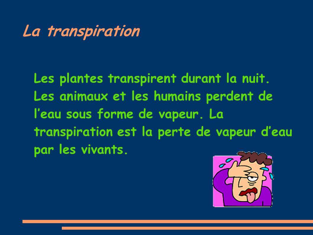La transpiration Les plantes transpirent durant la nuit. Les animaux et les humains perdent de leau sous forme de vapeur. La transpiration est la pert
