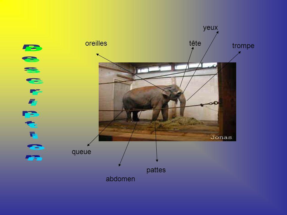 C est un mammifère de la famille des éléphantidés.