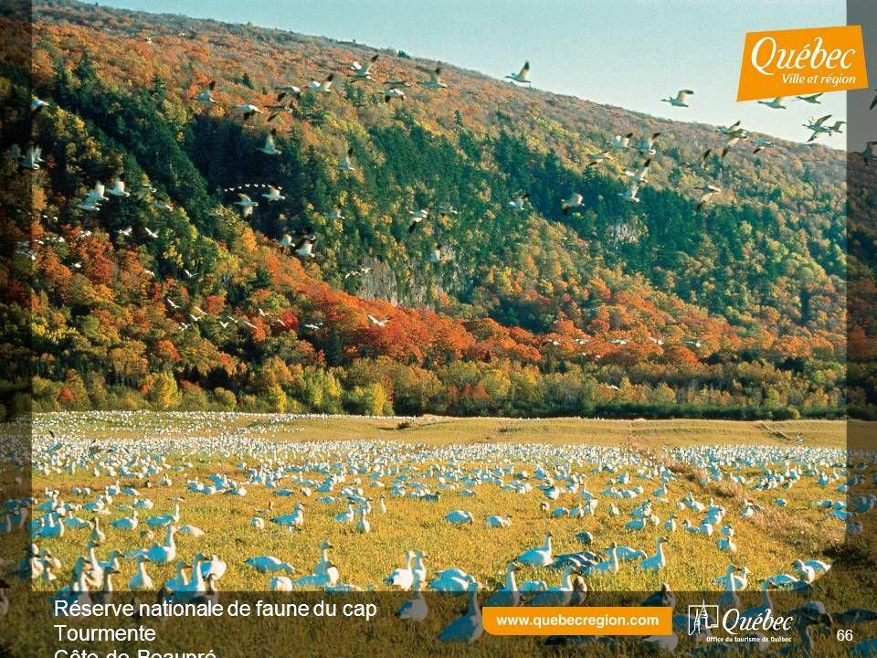 Réserve nationale de faune du cap Tourmente Côte-de-Beaupré 66
