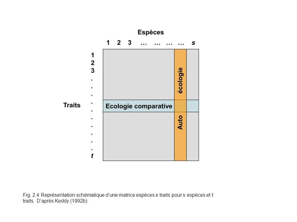 Fig. 2.4 Représentation schématique dune matrice espèces x traits pour s espèces et t traits. Daprès Keddy (1992b)