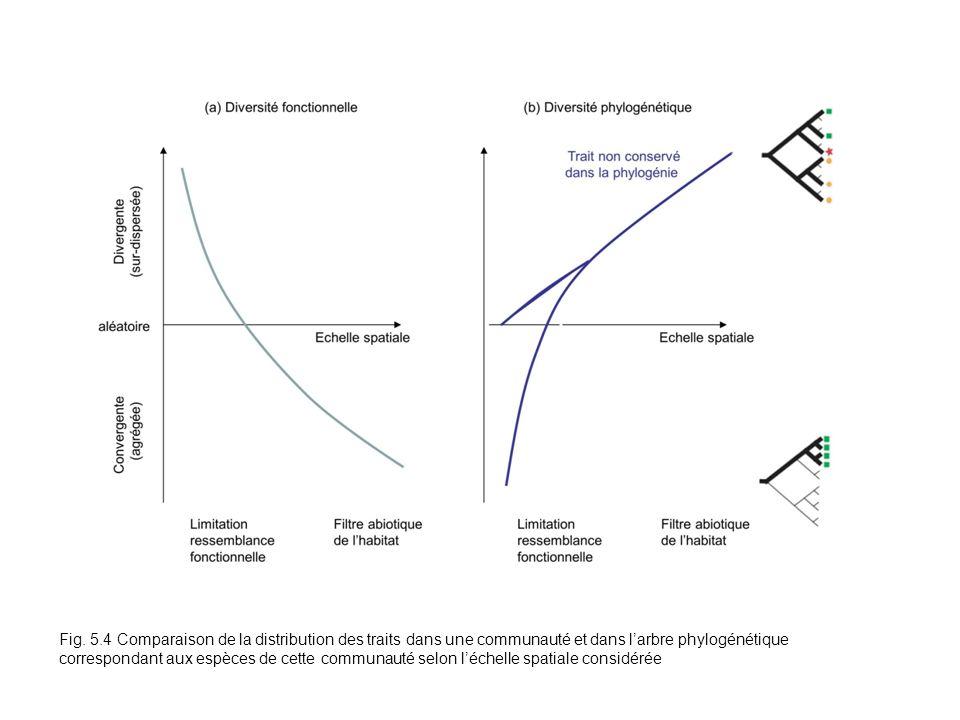 Fig. 5.4 Comparaison de la distribution des traits dans une communauté et dans larbre phylogénétique correspondant aux espèces de cette communauté sel