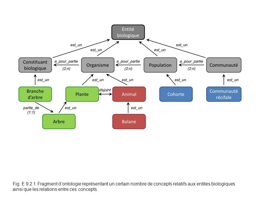 Fig. E 9.2.1 Fragment dontologie représentant un certain nombre de concepts relatifs aux entites biologiques ainsi que les relations entre ces concept