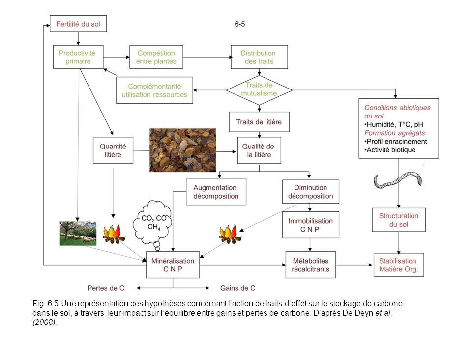 Fig. 6.5 Une représentation des hypothèses concernant laction de traits deffet sur le stockage de carbone dans le sol, à travers leur impact sur léqui
