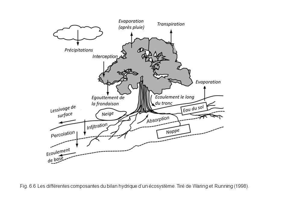 Fig. 6.6 Les différentes composantes du bilan hydrique dun écosystème.