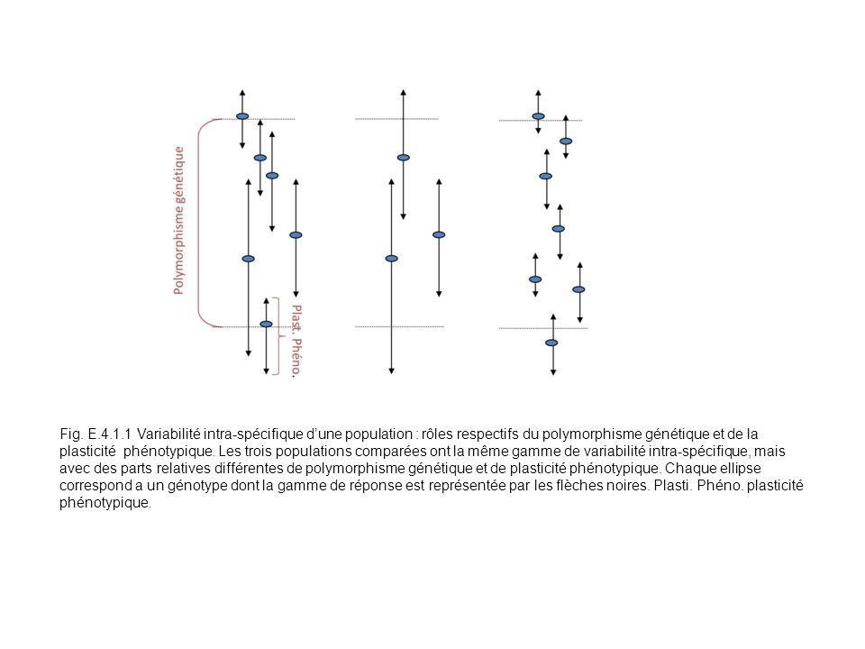 Fig. E.4.1.1 Variabilité intra-spécifique dune population : rôles respectifs du polymorphisme génétique et de la plasticité phénotypique. Les trois po