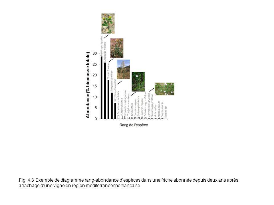 Fig. 4.3 Exemple de diagramme rang-abondance despèces dans une friche abonnée depuis deux ans après arrachage dune vigne en région méditerranéenne fra