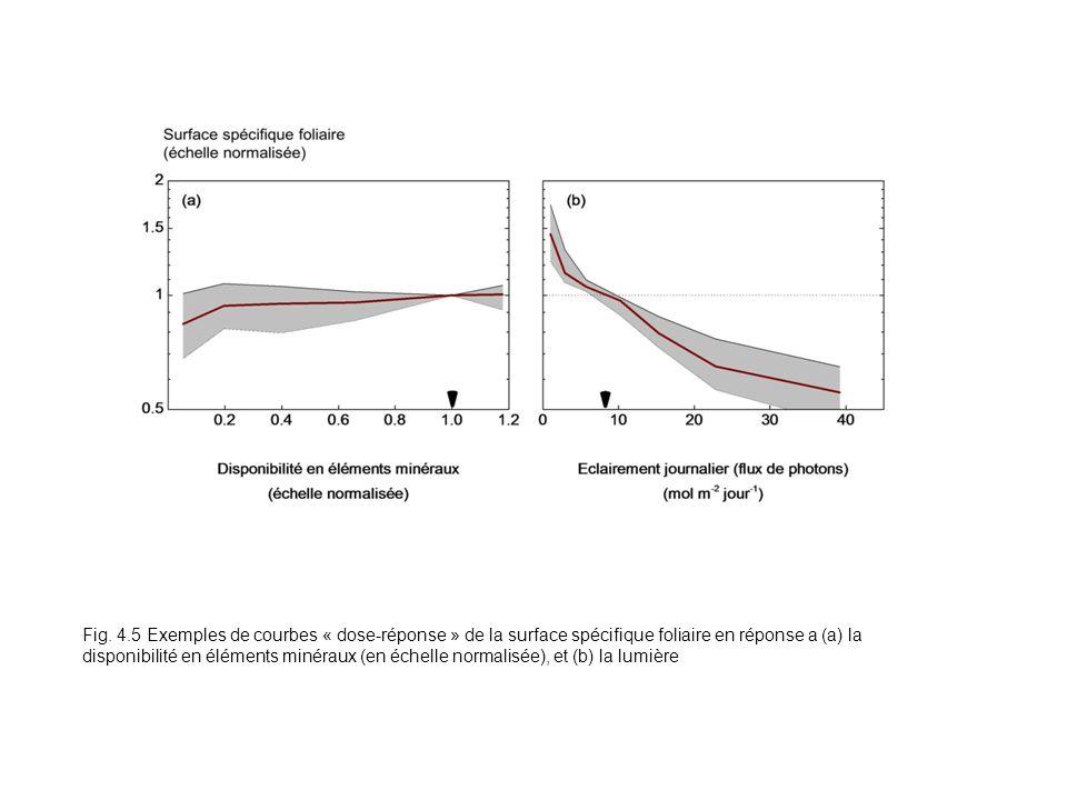 Fig. 4.5 Exemples de courbes « dose-réponse » de la surface spécifique foliaire en réponse a (a) la disponibilité en éléments minéraux (en échelle nor