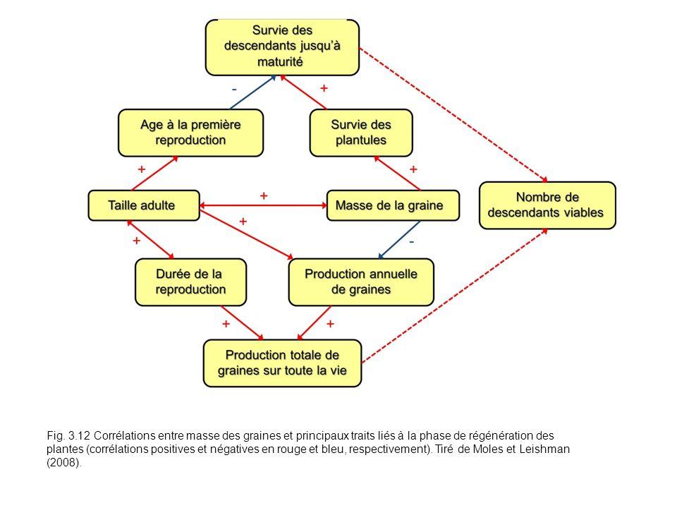 Fig. 3.12 Corrélations entre masse des graines et principaux traits liés à la phase de régénération des plantes (corrélations positives et négatives e