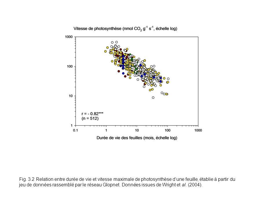 Fig. 3.2 Relation entre durée de vie et vitesse maximale de photosynthèse dune feuille, établie à partir du jeu de données rassemblé par le réseau Glo