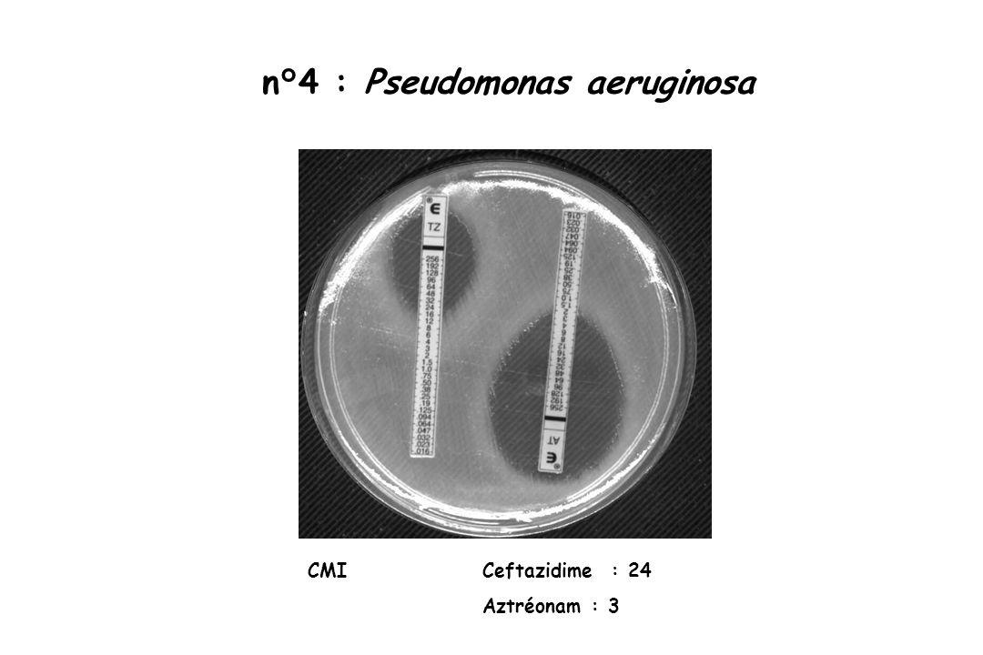 n°4 : Pseudomonas aeruginosa CMI Ceftazidime : 24 Aztréonam : 3