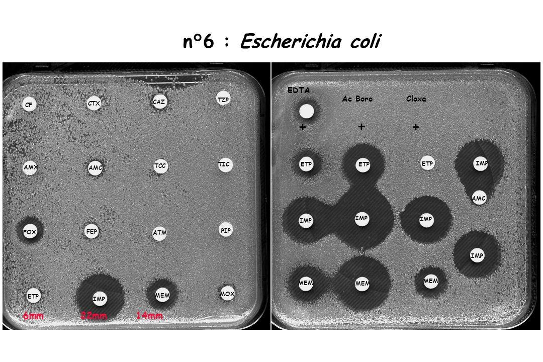n°6 : Escherichia coli CF CTX TZP AMX FEP FOX TIC AMC PIP CAZ TCC ATM IMP ETP MOX MEM IMP ETP MEM IMP ETP MEM IMP ETP MEM AMC IMP EDTA + ++ Ac Boro Cl