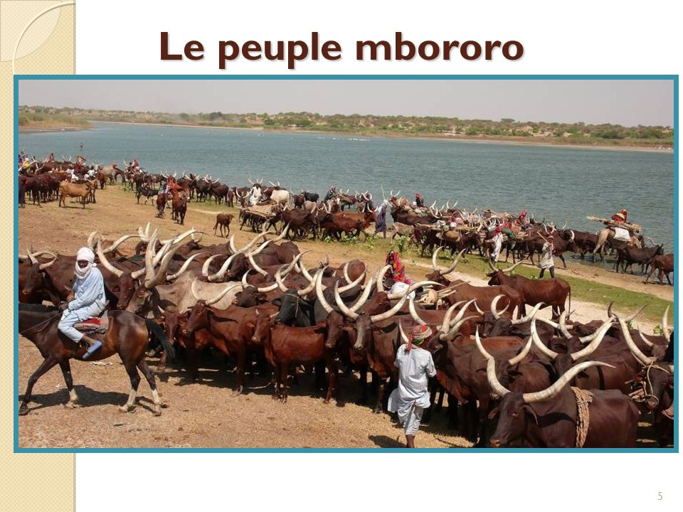 Bergers nomades et semi- nomades Vivent au Cameroun, en République centrafricaine, au Tchad, au Niger et au Nigéria 250 000 au Tchad (recensement de 1993) Utilisent des systèmes de connaissances traditionnels face à lévolution des modèles climatiques saisonniers et pour la gestion durable de leurs maigres ressources.