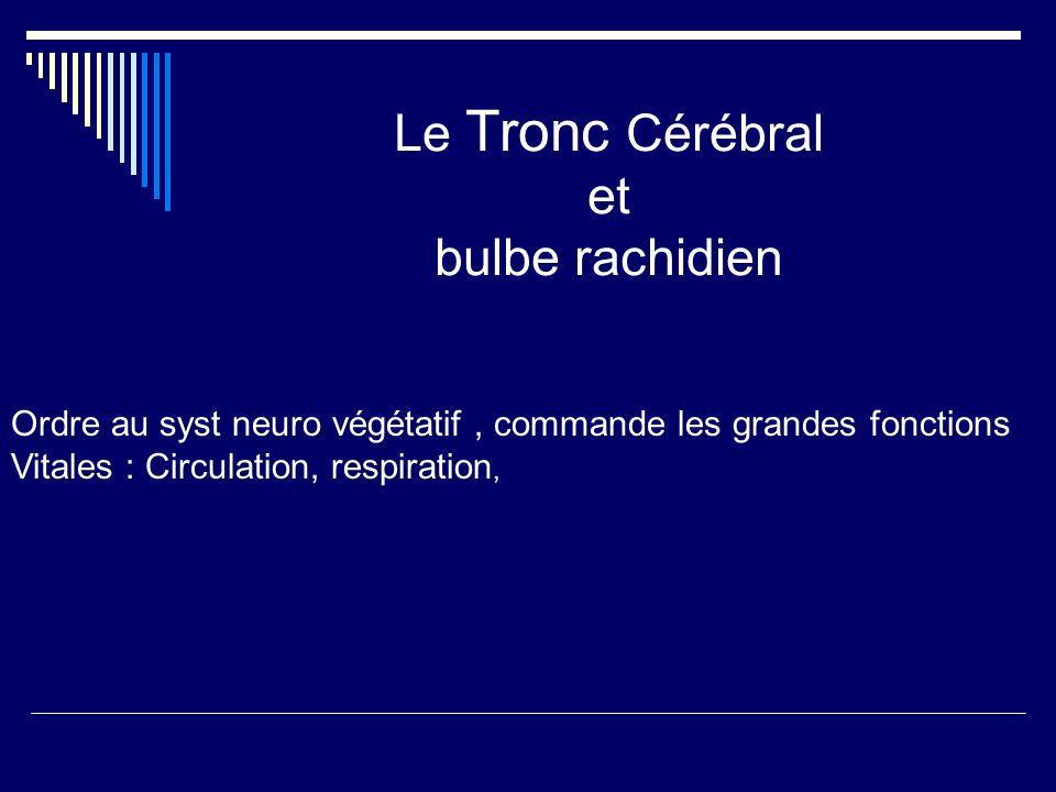 Le Tronc Cérébral et bulbe rachidien Ordre au syst neuro végétatif, commande les grandes fonctions Vitales : Circulation, respiration,