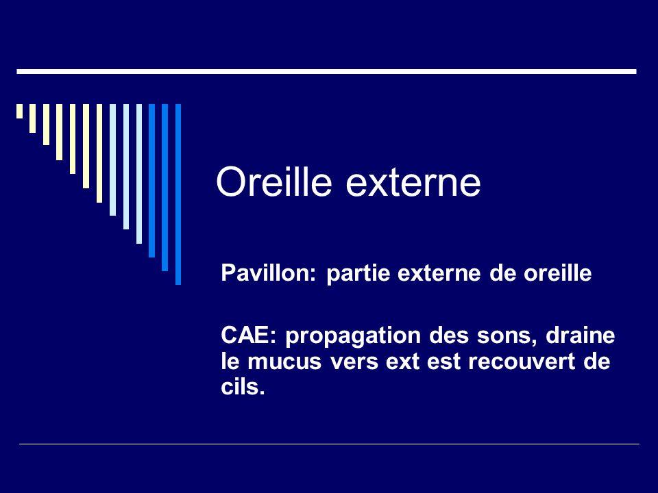 Oreille externe Pavillon: partie externe de oreille CAE: propagation des sons, draine le mucus vers ext est recouvert de cils.