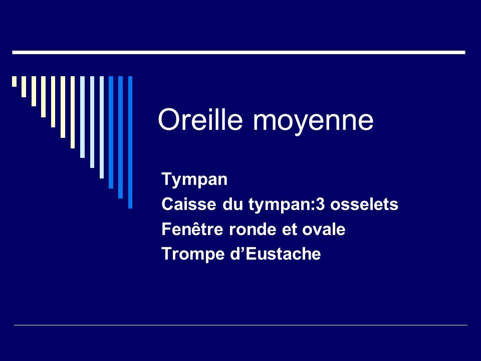 Oreille moyenne Tympan Caisse du tympan:3 osselets Fenêtre ronde et ovale Trompe dEustache