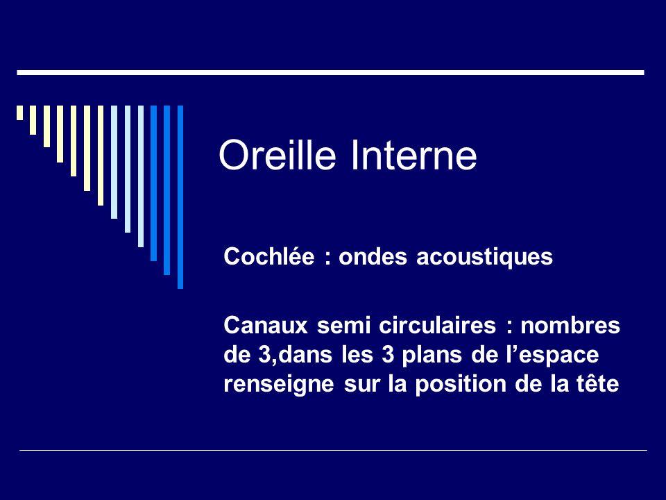 Oreille Interne Cochlée : ondes acoustiques Canaux semi circulaires : nombres de 3,dans les 3 plans de lespace renseigne sur la position de la tête