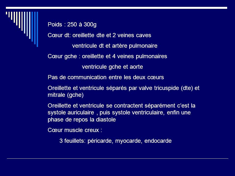 Poids : 250 à 300g Cœur dt: oreillette dte et 2 veines caves ventricule dt et artère pulmonaire Cœur gche : oreillette et 4 veines pulmonaires ventric