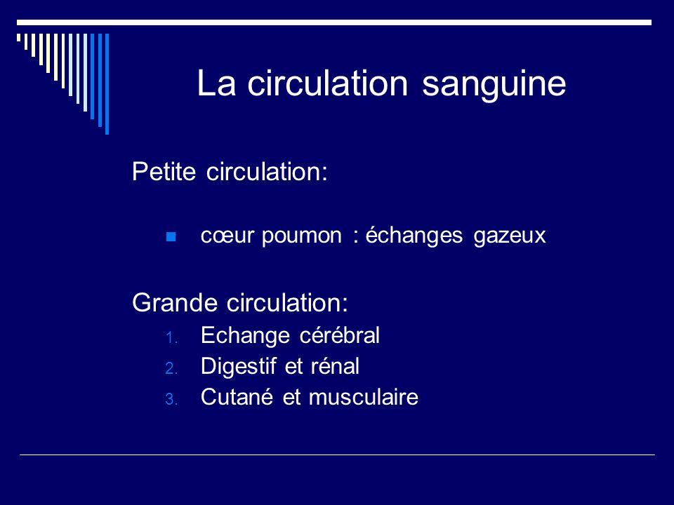La circulation sanguine Petite circulation: cœur poumon : échanges gazeux Grande circulation: 1. Echange cérébral 2. Digestif et rénal 3. Cutané et mu