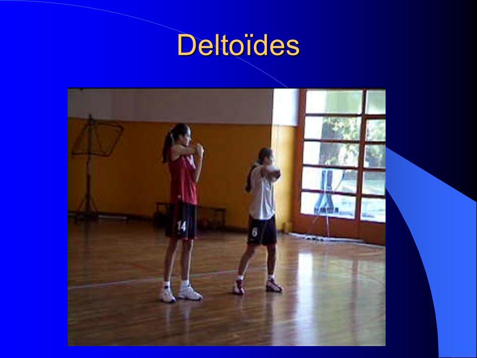 Deltoïdes