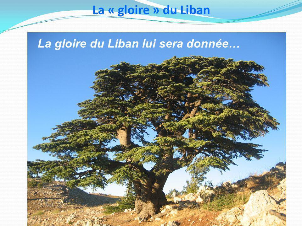 La « gloire » du Liban La gloire du Liban lui sera donnée…