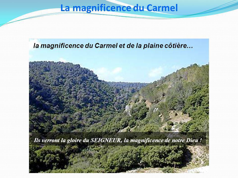 La magnificence du Carmel la magnificence du Carmel et de la plaine côtière… Ils verront la gloire du SEIGNEUR, la magnificence de notre Dieu !