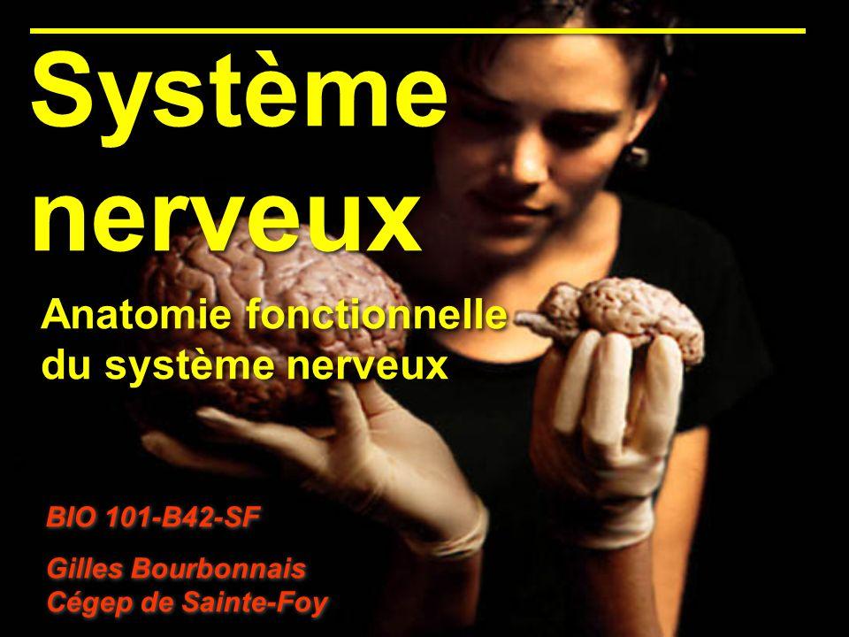 Système nerveux BIO 101-B42-SF Gilles Bourbonnais Cégep de Sainte-Foy BIO 101-B42-SF Gilles Bourbonnais Cégep de Sainte-Foy Anatomie fonctionnelle du