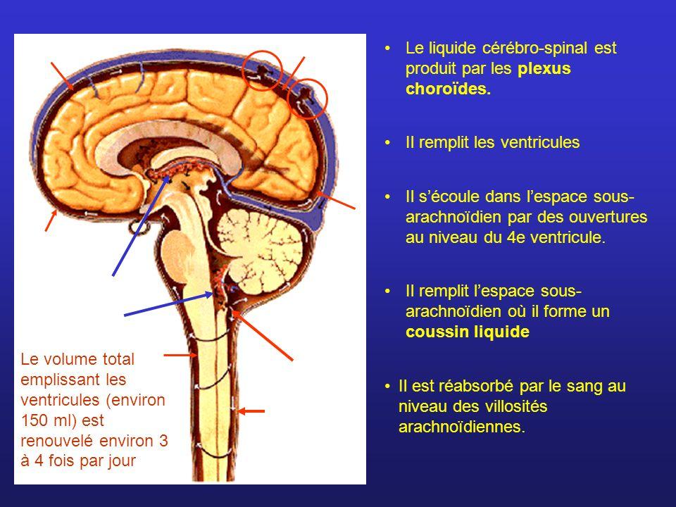Il est réabsorbé par le sang au niveau des villosités arachnoïdiennes. Le liquide cérébro-spinal est produit par les plexus choroïdes. Il remplit les