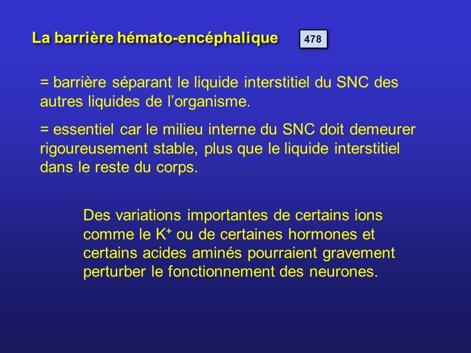La barrière hémato-encéphalique 478 = barrière séparant le liquide interstitiel du SNC des autres liquides de lorganisme. = essentiel car le milieu in