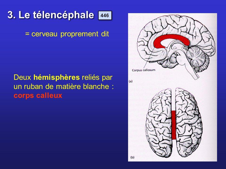 Deux hémisphères reliés par un ruban de matière blanche : corps calleux 3. Le télencéphale 446 = cerveau proprement dit