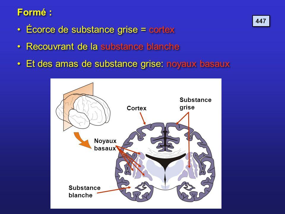 Formé : Écorce de substance grise = cortex Recouvrant de la substance blanche Et des amas de substance grise: noyaux basaux Formé : Écorce de substanc