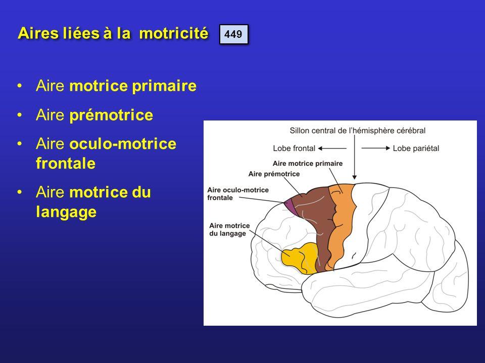 Aires liées à la motricité Aire motrice primaire Aire prémotrice Aire oculo-motrice frontale Aire motrice du langage 449