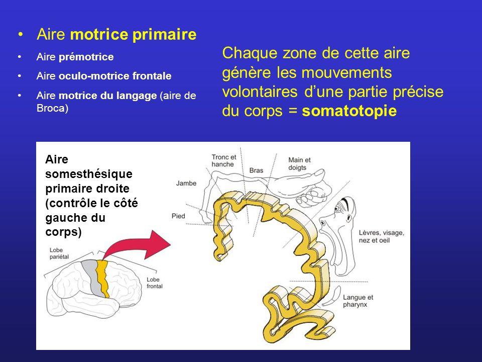 Aire motrice primaire Aire prémotrice Aire oculo-motrice frontale Aire motrice du langage (aire de Broca) Aire somesthésique primaire droite (contrôle