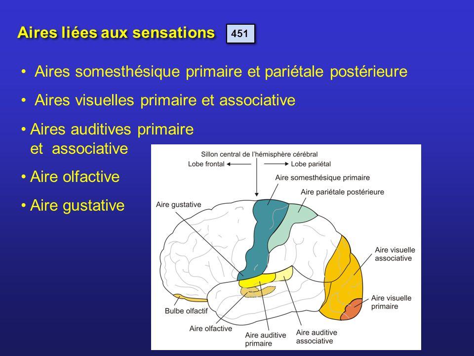 Aires liées aux sensations Aires auditives primaire et associative Aire olfactive Aire gustative Aires somesthésique primaire et pariétale postérieure
