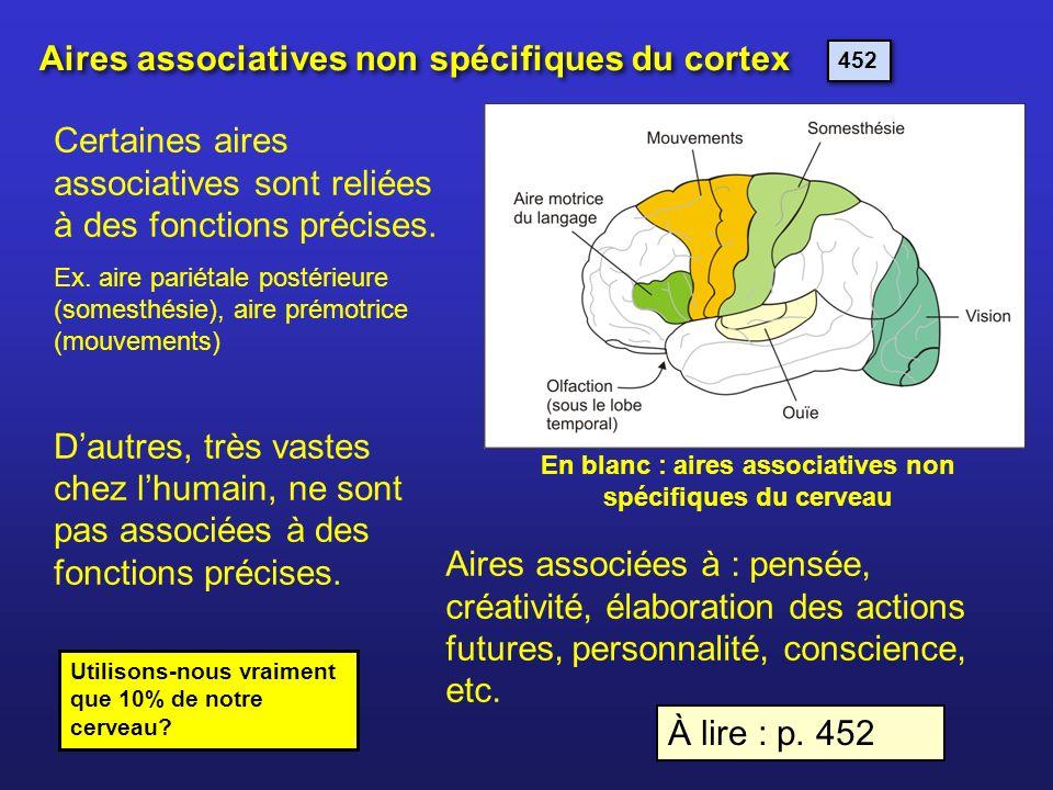Aires associatives non spécifiques du cortex Utilisons-nous vraiment que 10% de notre cerveau? Certaines aires associatives sont reliées à des fonctio