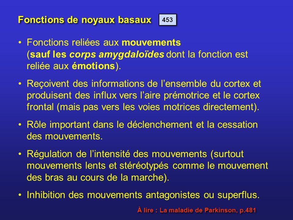 Fonctions de noyaux basaux Fonctions reliées aux mouvements (sauf les corps amygdaloïdes dont la fonction est reliée aux émotions). Reçoivent des info