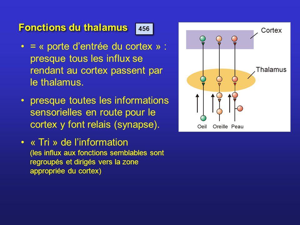= « porte dentrée du cortex » : presque tous les influx se rendant au cortex passent par le thalamus. presque toutes les informations sensorielles en