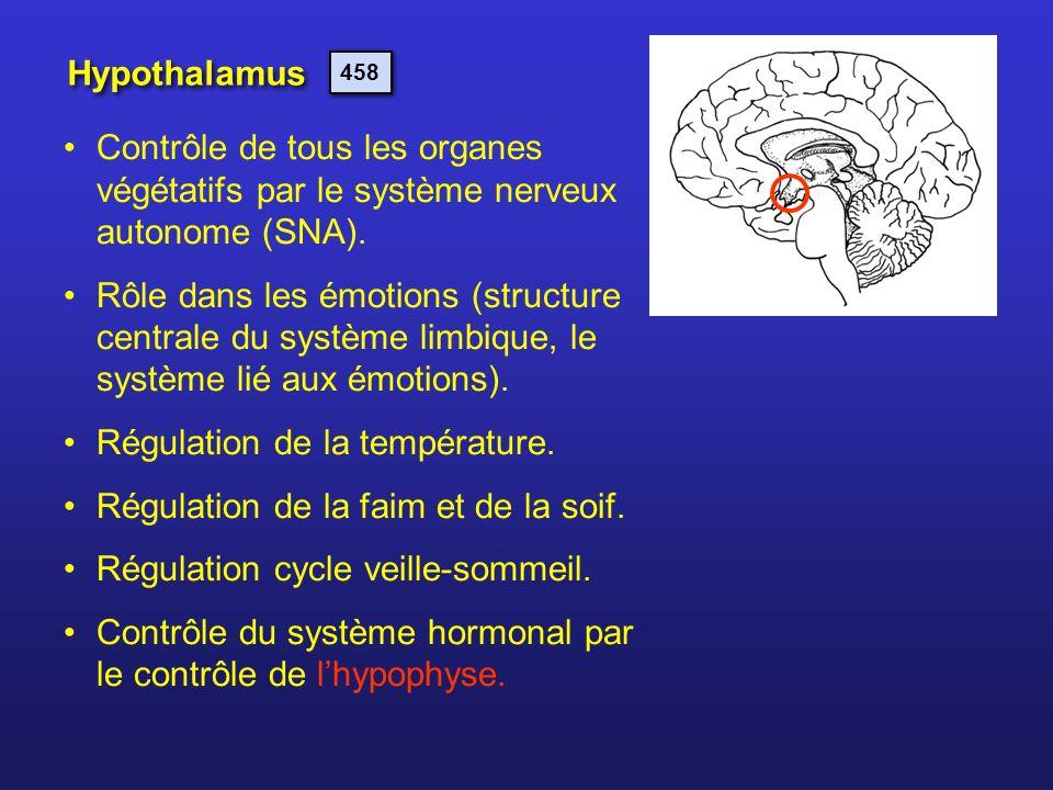 Hypothalamus Contrôle de tous les organes végétatifs par le système nerveux autonome (SNA). Rôle dans les émotions (structure centrale du système limb
