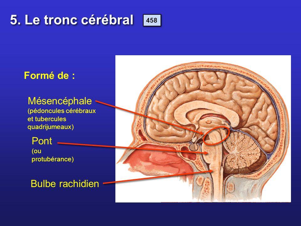 Formé de : Mésencéphale (pédoncules cérébraux et tubercules quadrijumeaux) Pont (ou protubérance) Bulbe rachidien 5. Le tronc cérébral 458