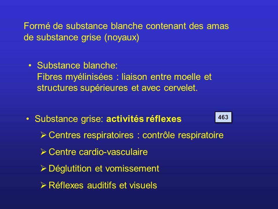 Formé de substance blanche contenant des amas de substance grise (noyaux) Substance blanche: Fibres myélinisées : liaison entre moelle et structures s