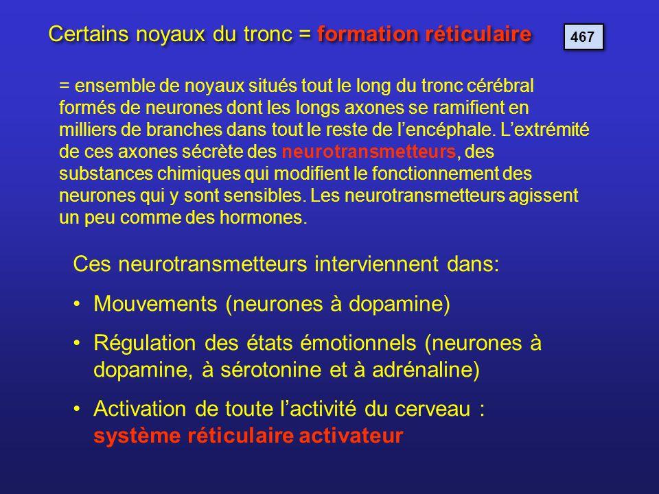 Certains noyaux du tronc = formation réticulaire = ensemble de noyaux situés tout le long du tronc cérébral formés de neurones dont les longs axones s